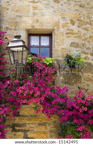 Purple flowers growing on an old wall underneath a small window and a lamp