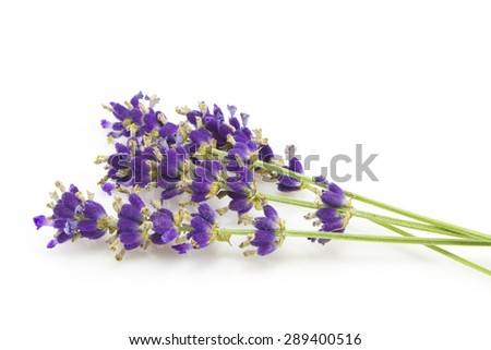 Purple Flowers of lavender isolated on white background - stock photo