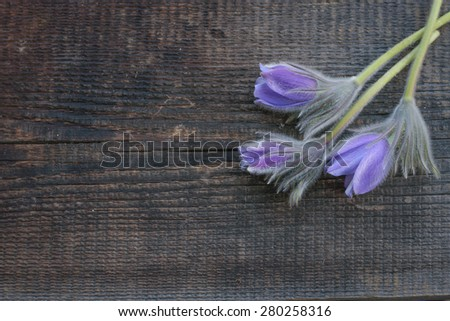 purple forest flowers on wooden background - stock photo