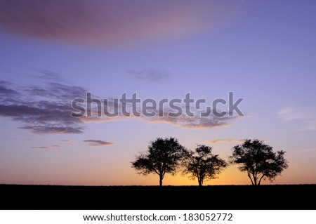Purple Glow of Sunrise With Trees - stock photo