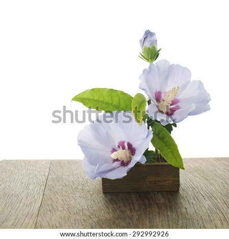 purple hibiscus flowers and fragrant olive leaves ikebana on a table - stock photo