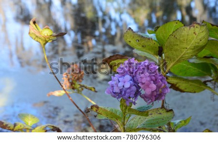 Purple Hydrangea Flower Near Water Background