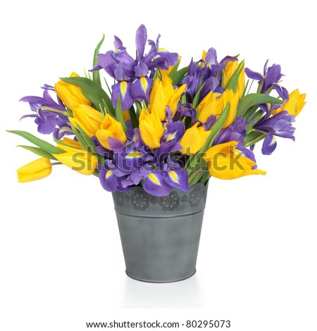 Purple iris and yellow tulip flower arrangement in a distressed metal vase and loose isolated over white background. - stock photo