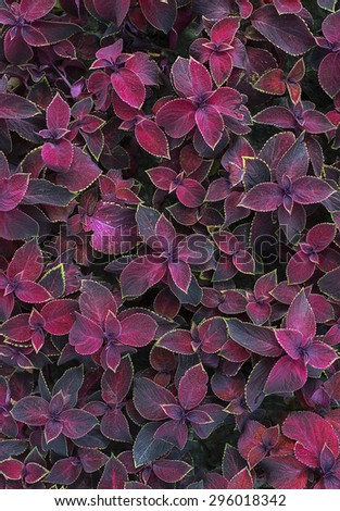 Purple leaf on a flowerbed like a background - stock photo