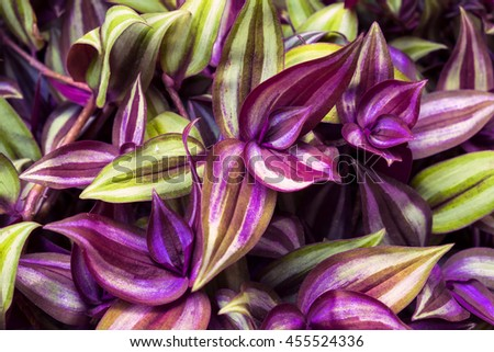 purple leaves on a wall, background - stock photo