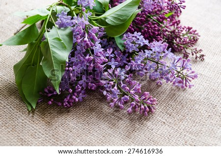 Purple lilac flowers as a background. Syringa vulgaris
