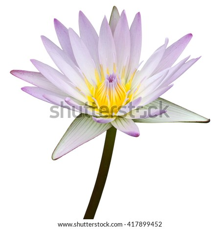 Purple lotus flower isolated on white with clipping path - stock photo