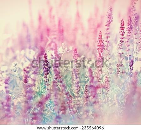 Purple meadow flower - stock photo