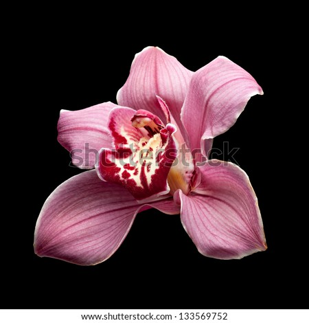 Purple Orchid Flower isolated on black  background - stock photo