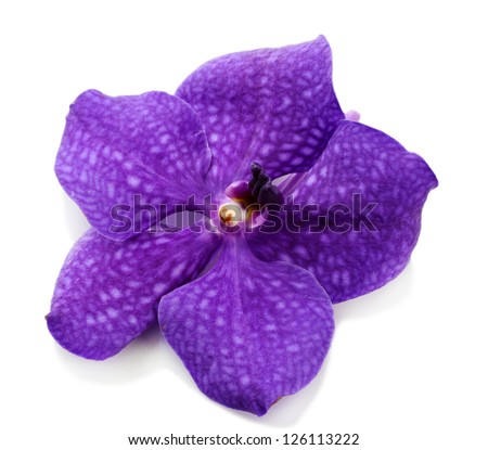 Purple orchid flower, isolated on white - stock photo