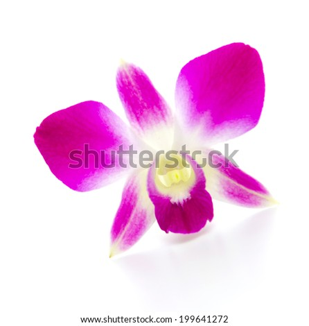 Purple orchid flower isolated white background