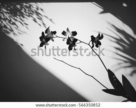 Orchid Silhouette Stock Images, Royalty-Free Images ...