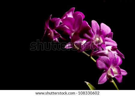 Purple orchid isolated on black background - stock photo