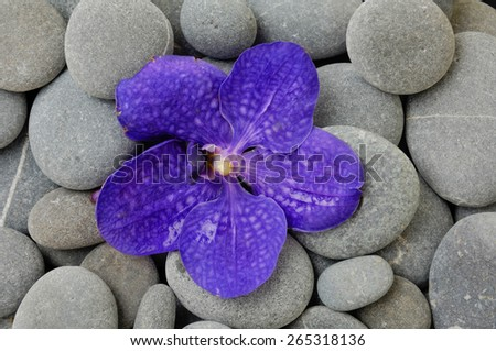 Purple orchid on pebbles background - stock photo