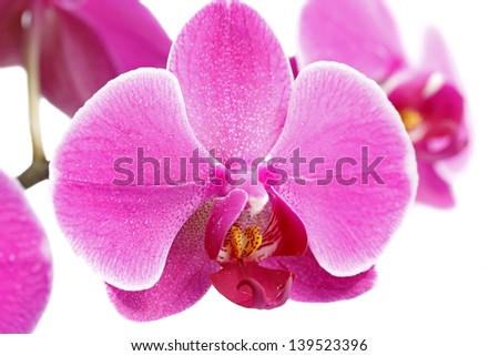 Purple orchid on white background - stock photo