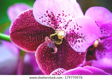 Purple orchids - stock photo