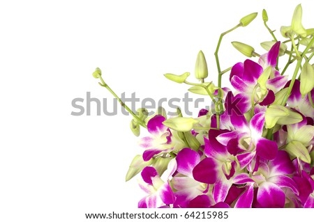 Purple orchids close-up with copy space on white.