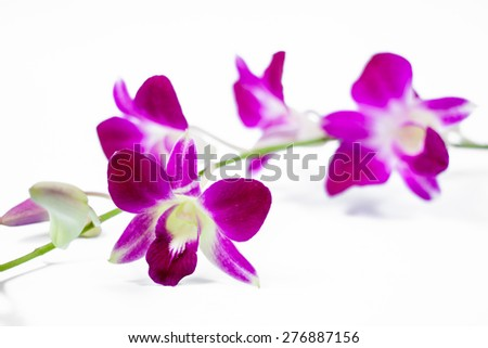 Purple orchids isolated - stock photo