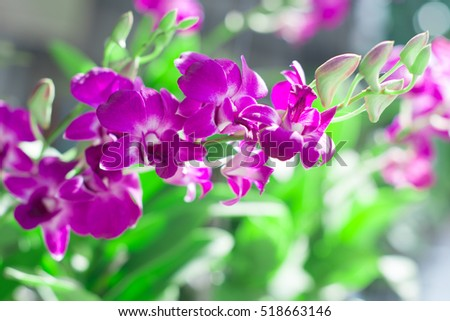 Purple orchids, Violet orchids. ,Orchids Is considered the queen of flowers in Thailand. Orchid in nature.