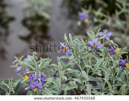 Purple petals yellow center small wild stock photo royalty free purple petals and yellow center of small wild bloom at gray waters edgelittle purple mightylinksfo Image collections