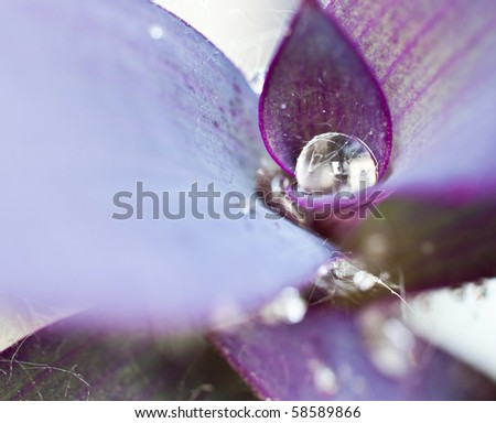 Purple petals of flower with drop of water - stock photo