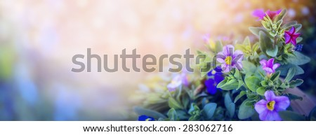 Purple petunia flowers bed on beautiful blurred nature background, banner for website with garden concept, toned - stock photo