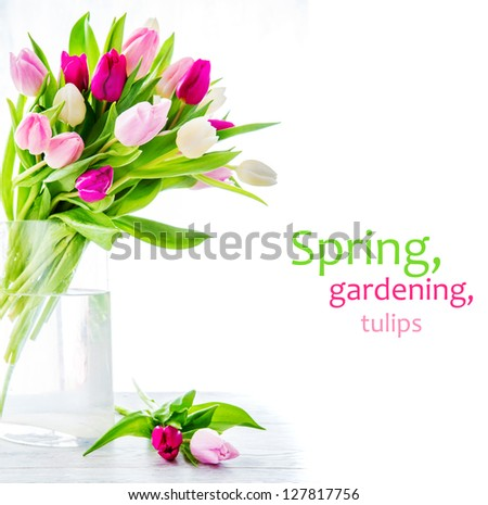 Purple, pink and white tulips in a glass vase - stock photo