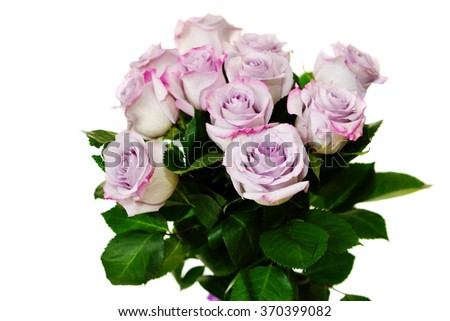 purple roses on the white background