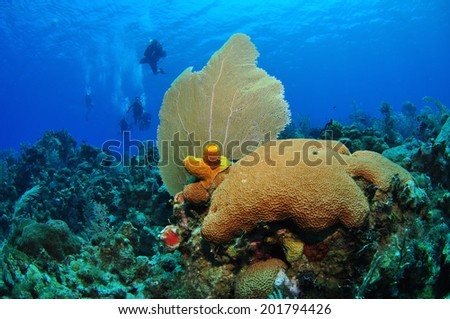 Purple Sea Fan with Divers in Background, Grand Cayman - stock photo