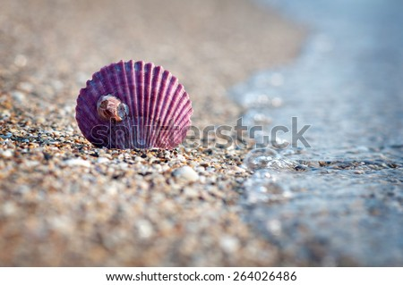 Purple sea shell on the beach - stock photo