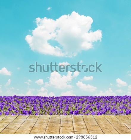 Purple tulip field and blue sky landscape - stock photo