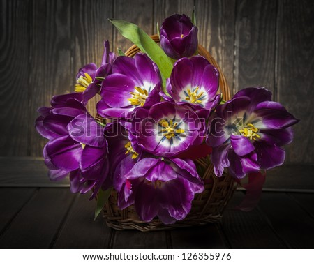 purple tulips in a basket - vintage style - stock photo