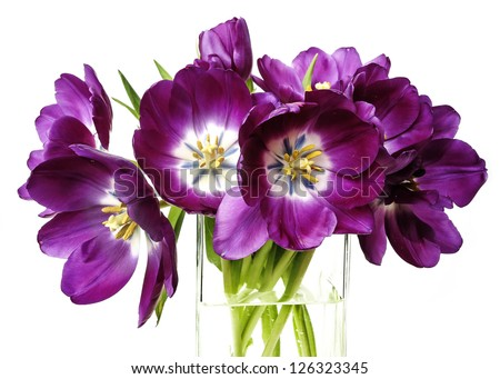 purple tulips in a glass vase