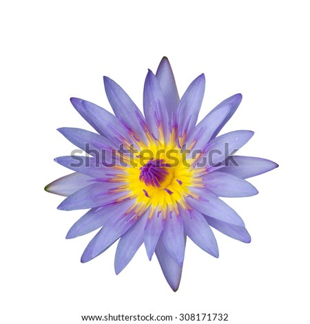 Purple waterlily with yellow center isolated on white background and clipping path included - stock photo