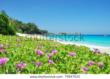 Purple wild flowers on  beach - stock photo