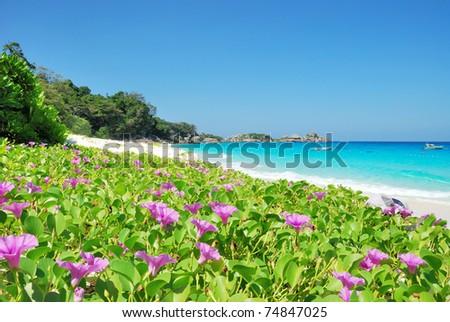 Purple wild flowers on  beach - stock photo