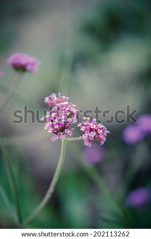 Purple wildflower with green background - stock photo