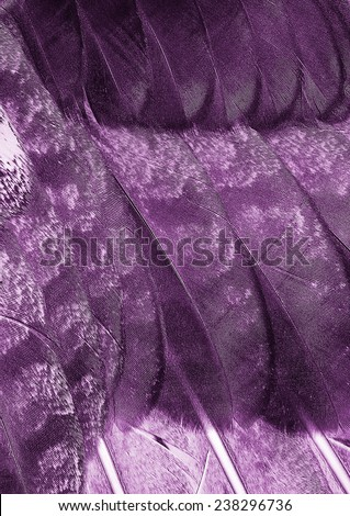 purple wing close up - abstract background - stock photo
