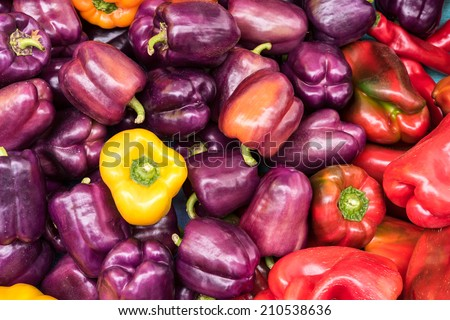 Purple, Yellow, Red Bell Peppers at Farmers Market, Fresh and Organic - stock photo