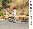 PUSHKAR, INDIA - OCT 22: goatherd moves with his goats to the next ground on Oct 22, 2012 near Pushkar, India.  Goats are the main source to earn money for the villagers in Marwari region. - stock photo