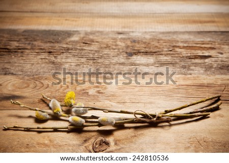 Pussy willow on rustic wooden background. With place for text. - stock photo
