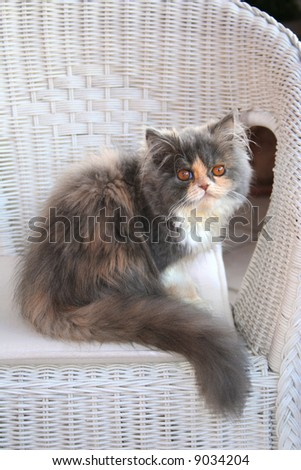 pussycat - stock photo