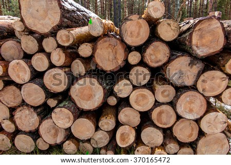 put together a pile of wood in the forest as a backdrop - stock photo