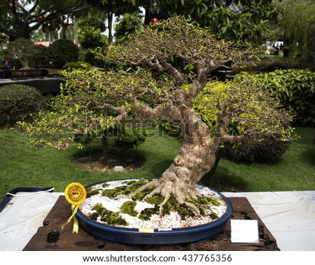 PUTRAJAYA, MALAYSIA - June 4, 2016 : Bonsai tree display for public at the Royal FLORIA Putrajaya Flower and Garden Festival 2016.
