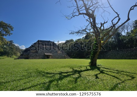 Pyramid and withered old tree in El Puente Archaeological Park in Honduras. - stock photo