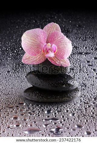 pyramid of black zen stones and pink orchid on wet background - stock photo