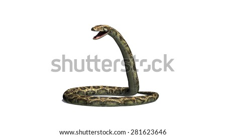 python snake - isolated on white background