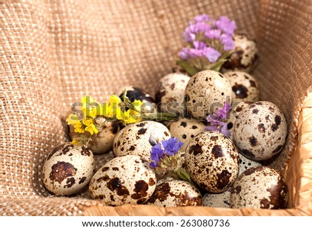 Quail eggs in basket and dry flowers.  - stock photo
