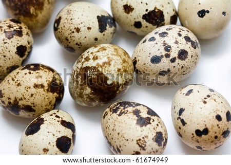 quail eggs on neutral white background