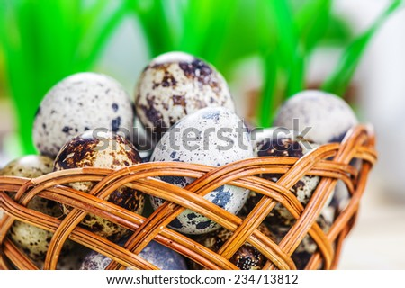 Quail eggs on wooden plate on table. - stock photo